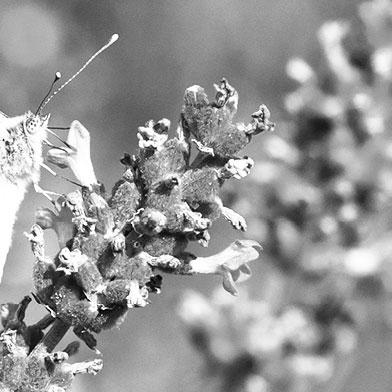 Die Insekten (Insecta)